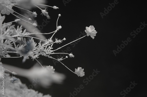 poster of Infrared photo – tree, cosmos flower and cloud in the parks