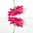 Leinwanddruck Bild reflet floral