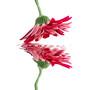 Leinwanddruck Bild contemplation florale