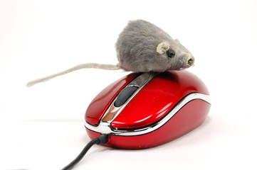 mouse & mouse