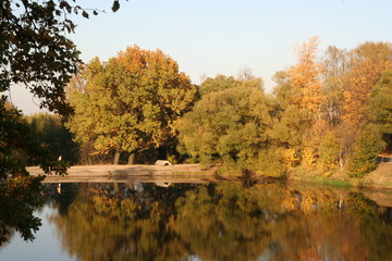 Fall pond and trees