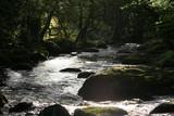 Dargle River, Ireland - Spring