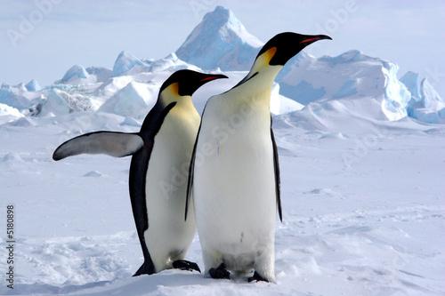 Tuinposter Pinguin Mais où est le pôle sud ? (Manchots Empereurs/Antarctique)