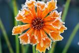 Frosty flower - Fine Art prints