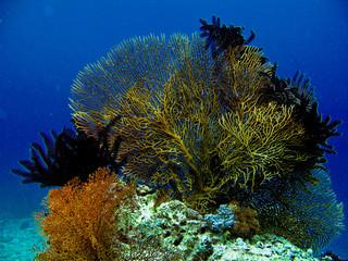 carte postale sous marine