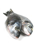 fish vertical