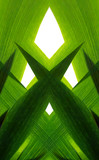 verde poster