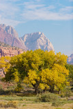 Fall Season in Zion National Park poster
