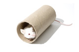 White mice on a roller isolated  poster