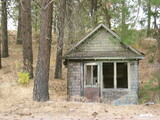 Outbuilding in Pine Forest