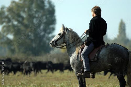 chevaux de camargue Poster