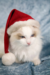Santa kitten
