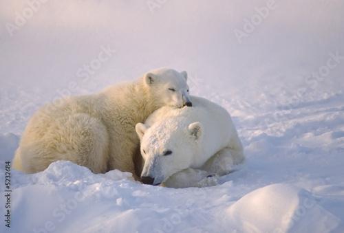 Fotobehang Ijsbeer Polar bear with her cub