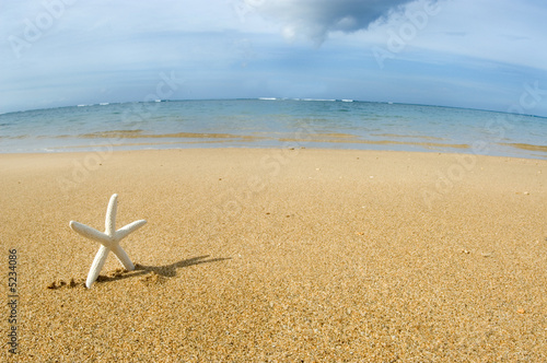 White starfish going home to the beach