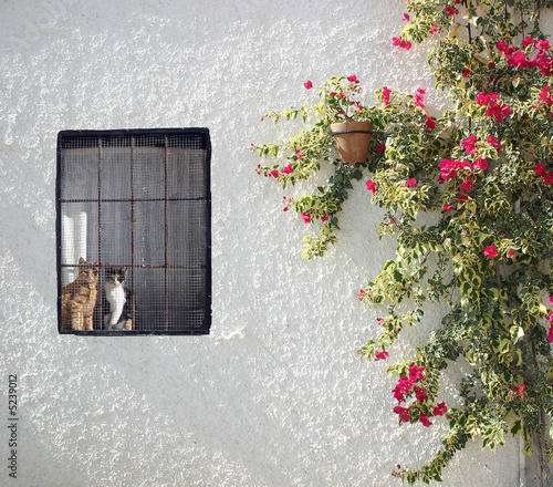 Pared con ventana, flores y gatos