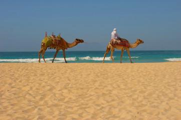 Camels, desert and ocean