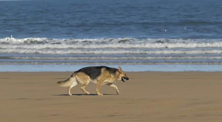 Perro con pelota por la playa