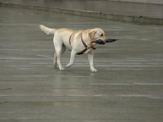 Perro con paraguas