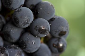 coronation grapes - macro