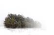 Mist winter landscape