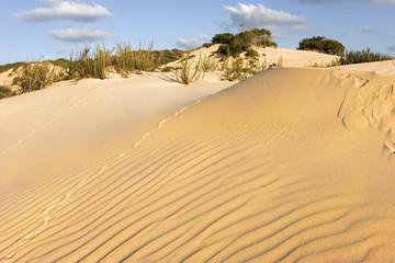 Sandy waves.
