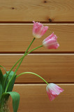 pink fringed tulips with oak wood wall background poster