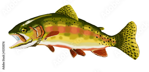 Golden trout2