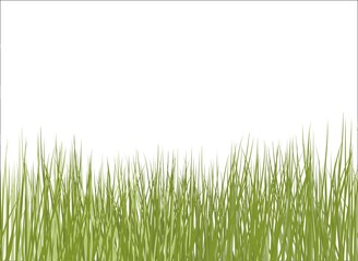 Sfondo bianco con erba in primo piano