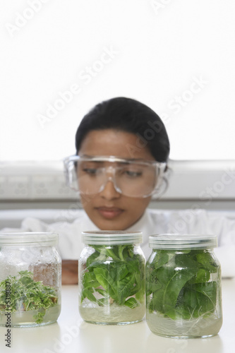 Lab Worker Examining Jars of Herbs