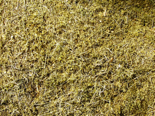 Fallen down pine needles in a moss