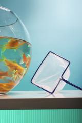 Goldfish Bowl and Net