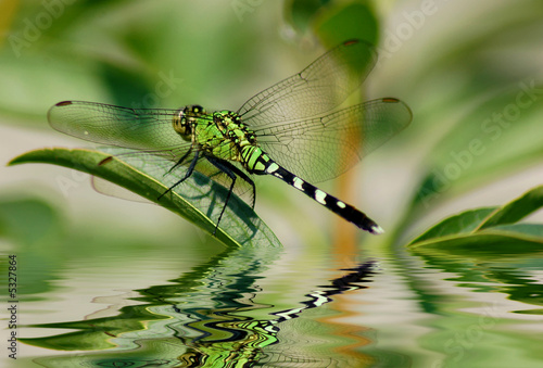 Dragonfly reflections