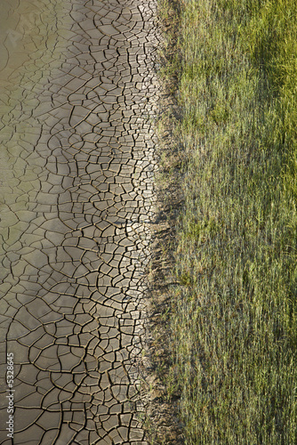 poster of Cracked mud with grasses.