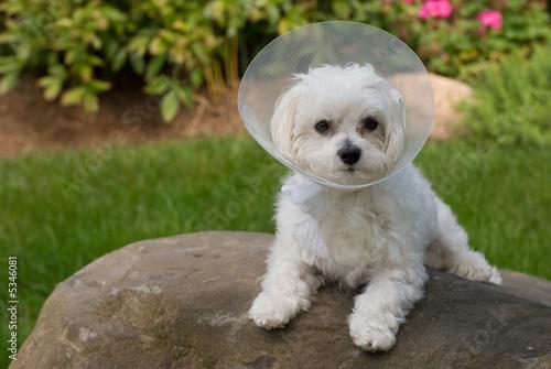puppy got sick