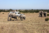 safari game drive with the elephants poster