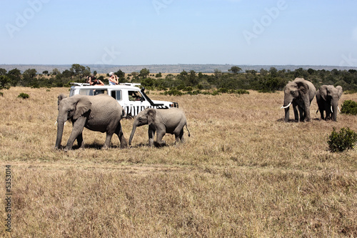 safari game drive with the elephants