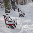 Red benches in the park in winter