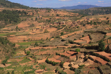 Typical Highland View of terraced paddy fields of Madagascar