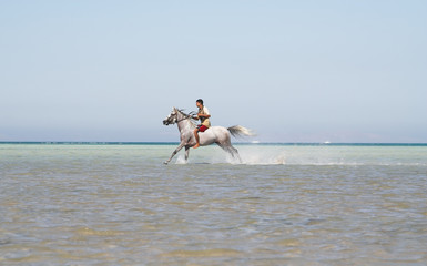 The Arabian stallion bathes in the red sea