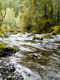 Dungeness River in the Pacific Northwest poster