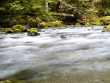 Dungeness River in the Pacific Northwest. poster