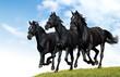Fototapeten,tier,pferd,russisch,galopp