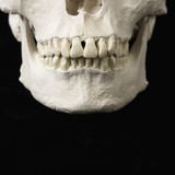 Jaw on skull. poster