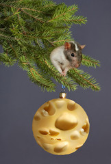 The rat decorates a New Year's fur-tree cheese