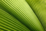 leaf texture background - Fine Art prints