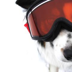 Extreme Doggy Sports