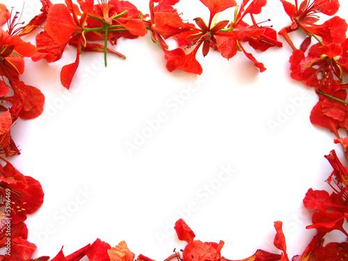 cadre fleurs de flamboyant photo libre de droits sur la banque d 39 images image. Black Bedroom Furniture Sets. Home Design Ideas