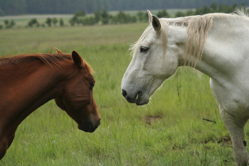 Two horses in the field.