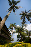 Hotel with large palm tree in the foreground poster