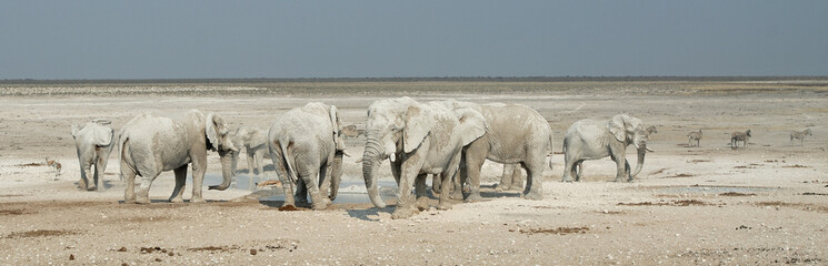 Eléphants près d'un point d'eau, parc d'Etosha